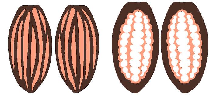 gambar, untuk contoh buah coklat diatas gambar pisau yang telah dibuat